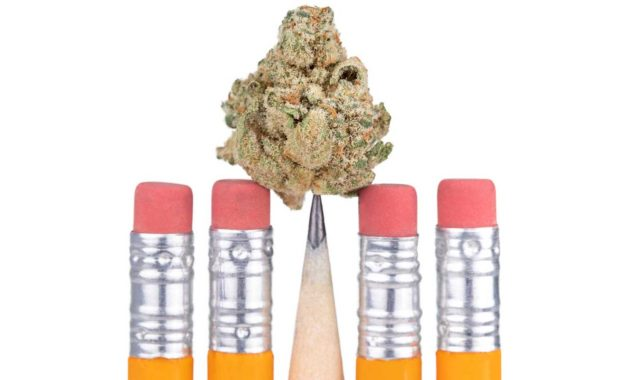 Marijuana on top of pencil depicting a dispensary content marketing strategy